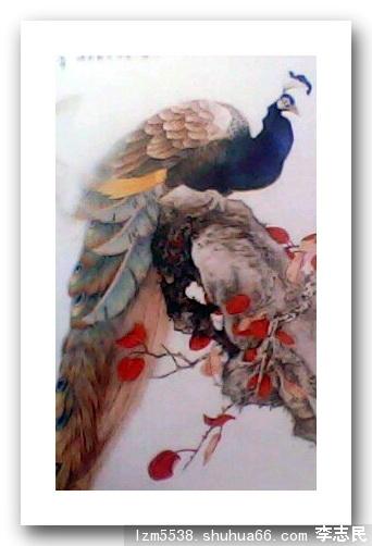 李致岷/[多人展厅] 国画工笔画鸟 孔雀作者;李致岷